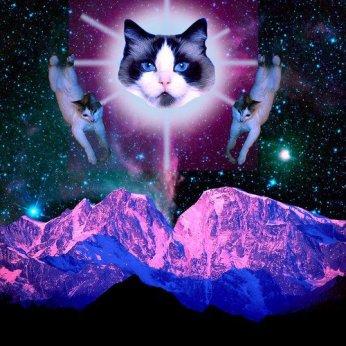 IOMN - cat planet